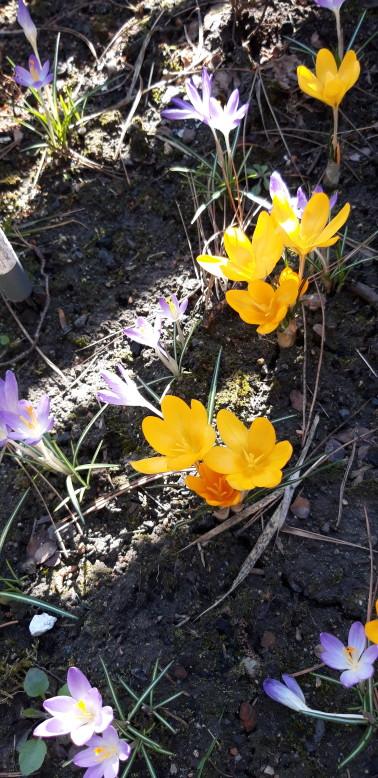 """I nareszcie mamy """"Naszą Wiosnę w Ogrodzie"""""""