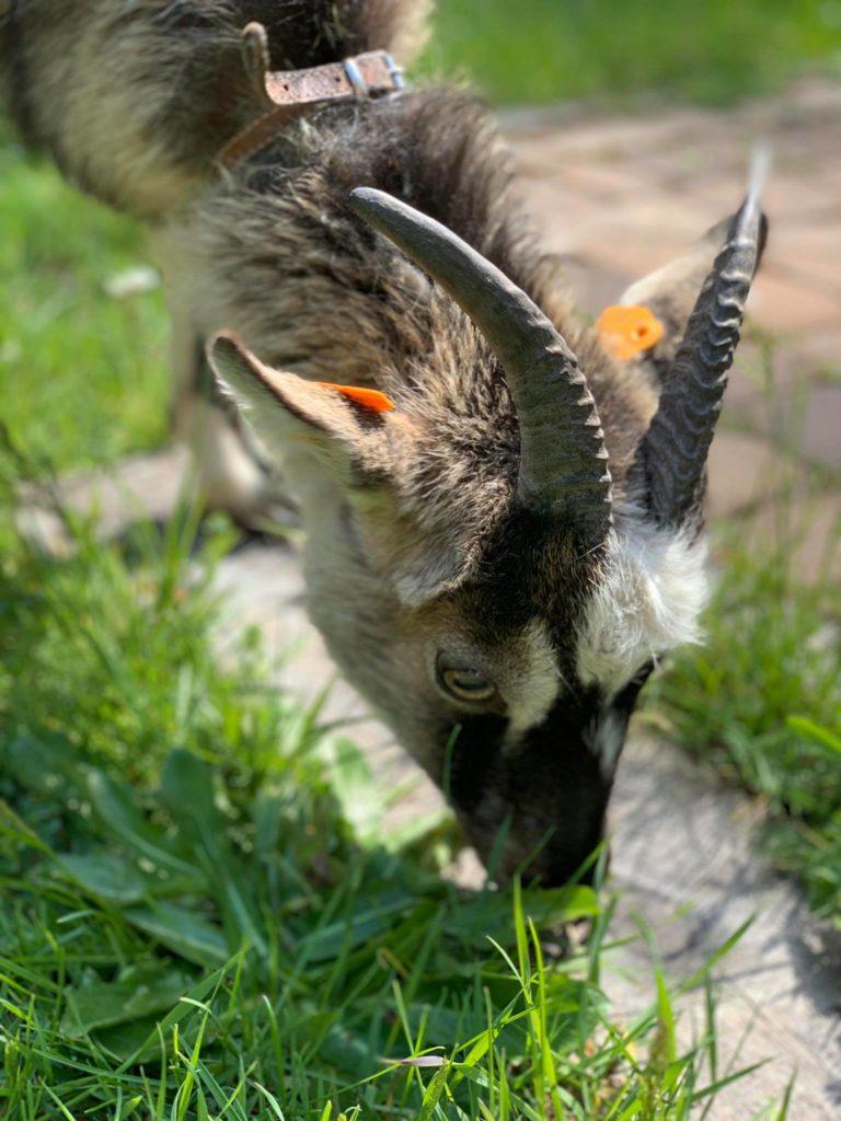 Zwierzęta w naszym hospicyjnym ogrodzie